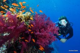 Subacquea donna e barriera corallina2
