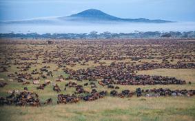 le grandi migrazioni in Tanzania