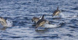 In Irlanda, dove il guizzo dei delfini colora la natura