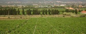 30 e 31 maggio, il Movimento Turismo del Vino brinda alla ripartenza